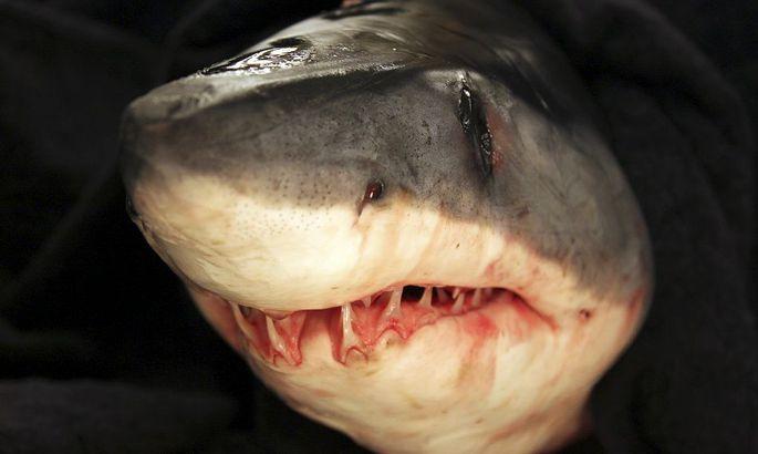 Акула убила туриста из Чехии на египетском курорте