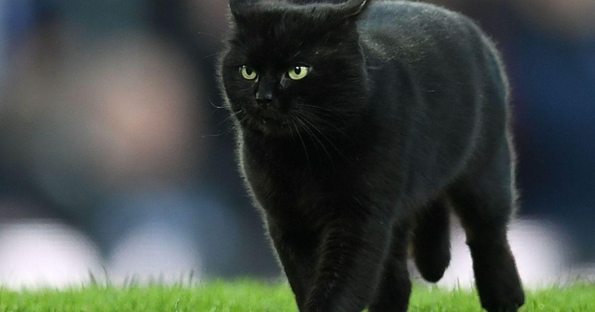 Fotod ja video: must kass jooksis Inglismaal jalgpallimängu ajal väljakul ringi