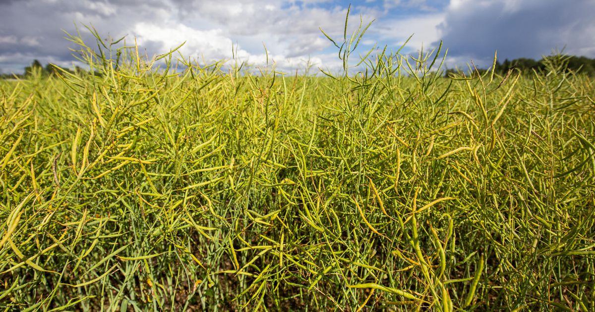Eesti toetab taimekaitseaine dimetoaadi keelustamist