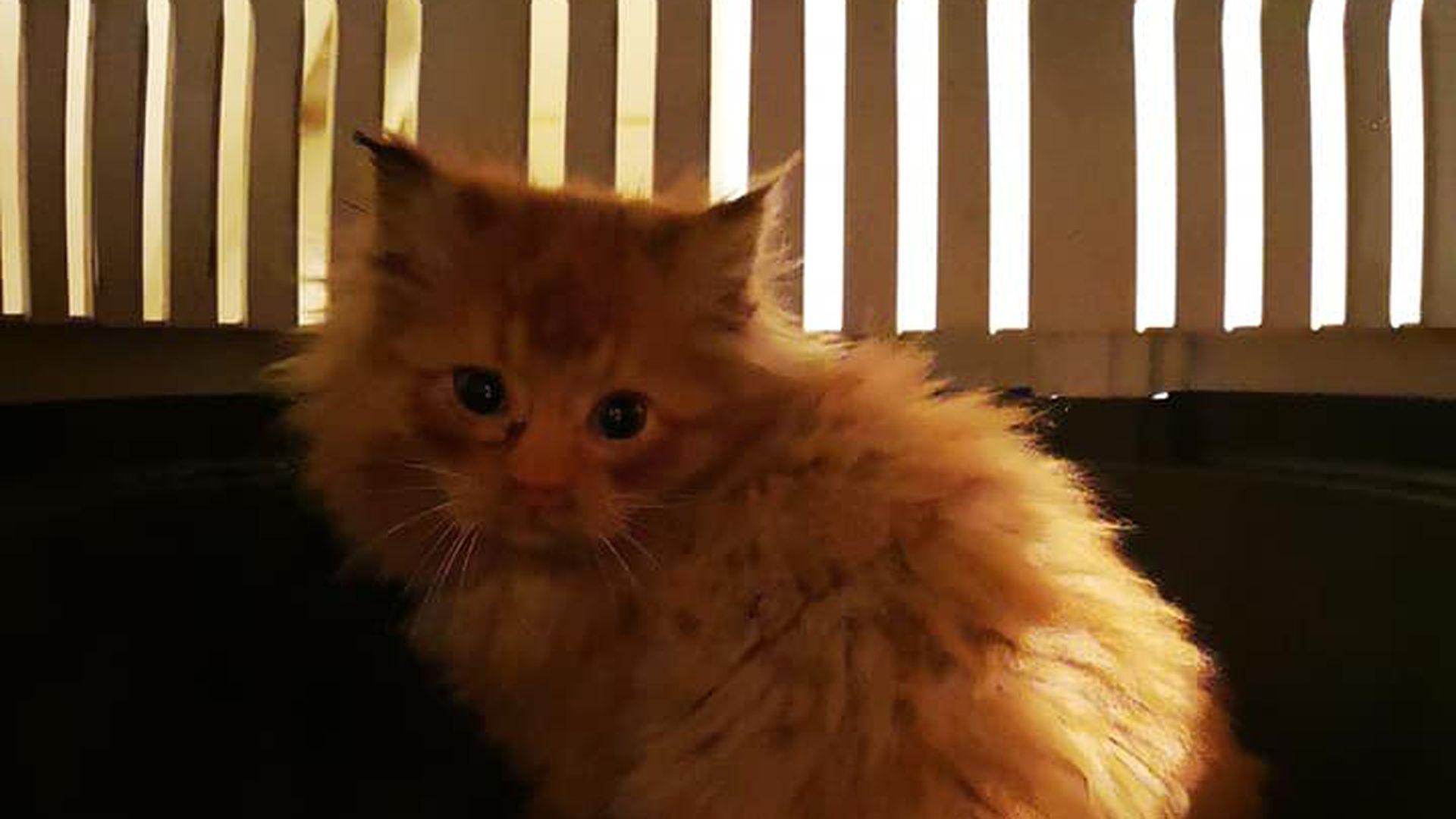 Dramaatiline päästemissioon Lasnamäel:  kassipoja püüdmiseks tuli riided seljast visata