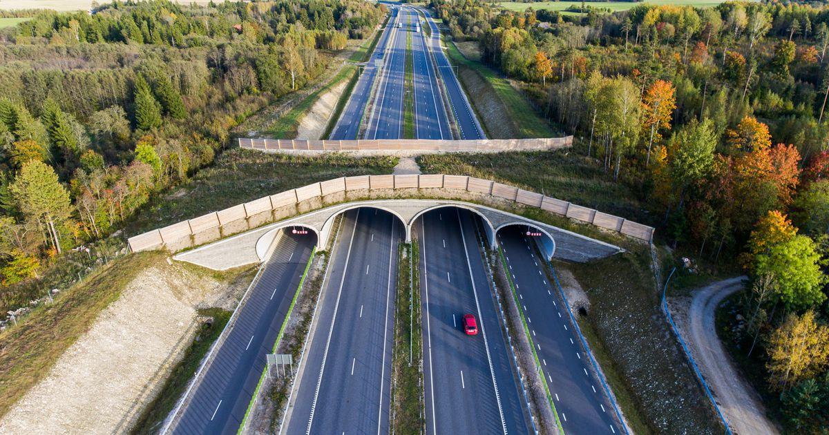 Aas: neljarajalise Tallinna–Tartu maantee projekteerimine algab järgmisel aastal