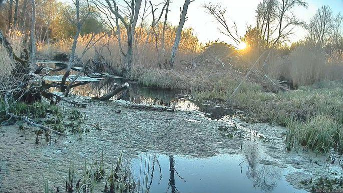 4d5764f88c9 Päikeseloojang kopra kuhilpesa taga. FOTO: RMK looduskaamera