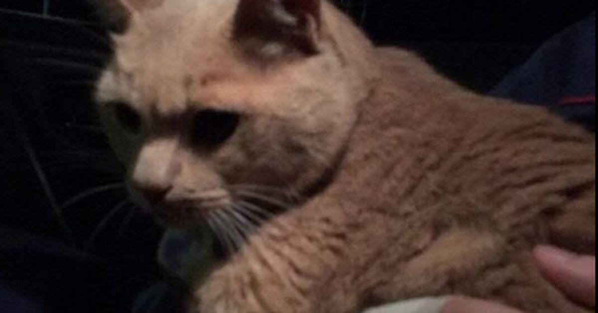 Lennusadama lähistele hüljatud kassile tulid appi tublid turvatöötajad