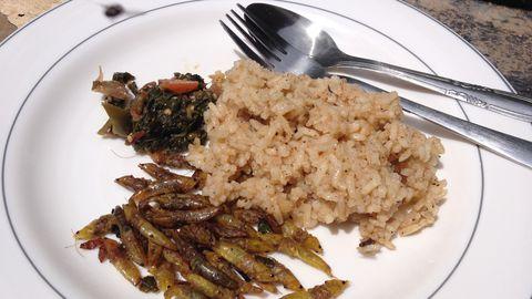 «Riis, lusikatäis värsket rohelist ja kergelt röstitud ritsikad on tavapärane lõuna Ugandas,» ütleb koos sealse Makerere ülikooli teadlastega putukate kasvatamist uurinud Erlend Sild.