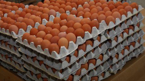 Suur munatootja loobub puurikanade munadest