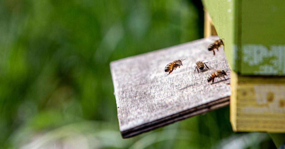 Pärnumaa tuhanded mesilaspered loeti üle