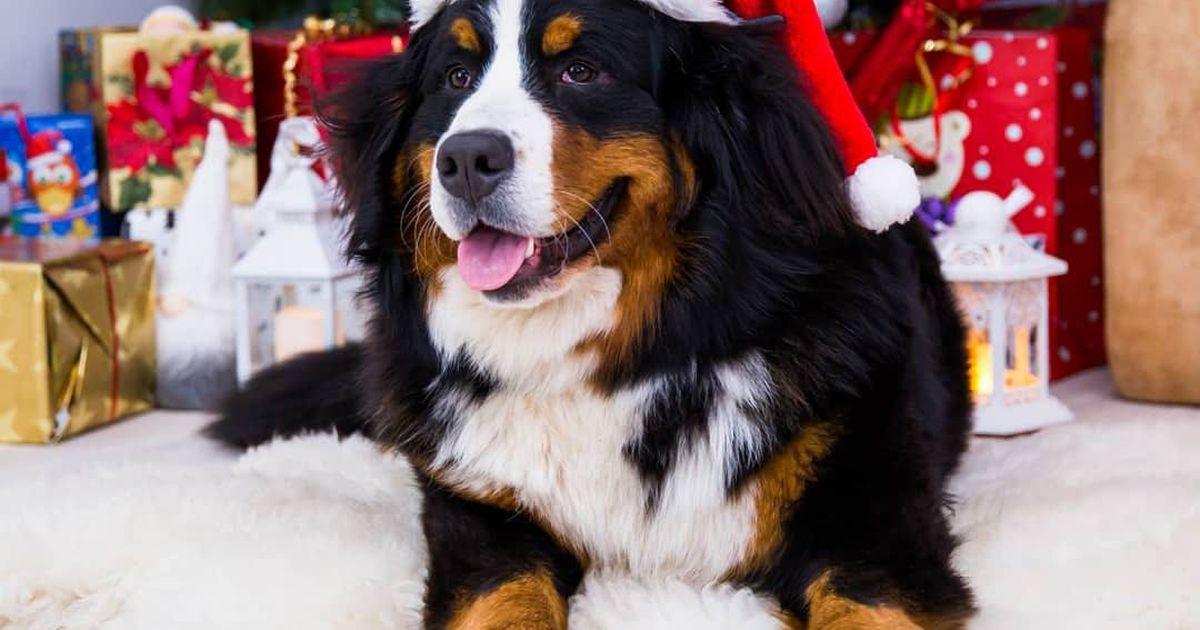 Suur Järva Teataja kingiloos: saada meile jõulumeeleolus lemmikutest pilt ja võida auhindu