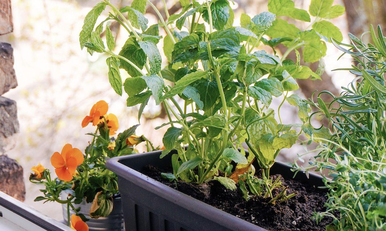Садоводство на подоконнике: с чего начать?