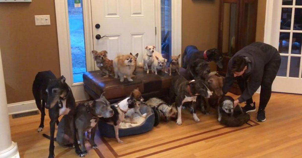 Video: 17 koera kasvatav paar demonstreerib, kuidas perepilte teha