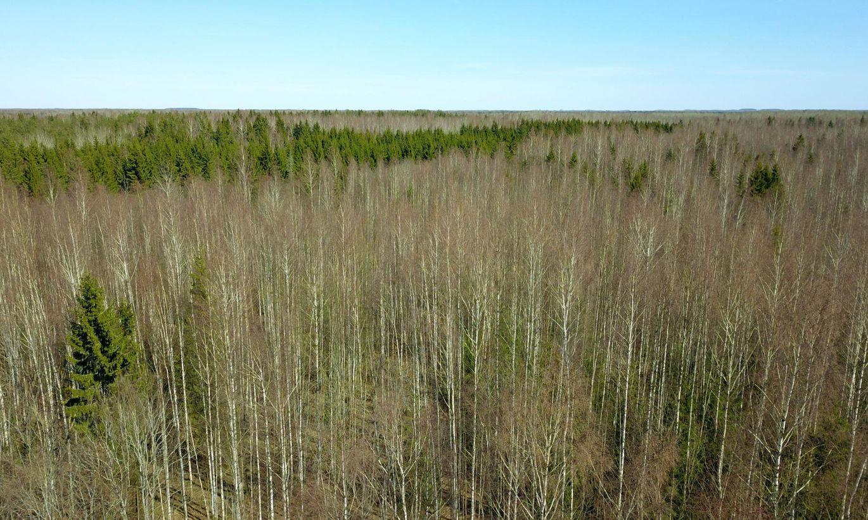 Kavandatav looduskaitseala paneb kohalikke ja jahimehi muretsema:  kes hooldab edaspidi teid, kes metsasihte?